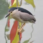 Rivière Jinjiang, un oiseau
