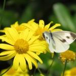 Encore une belle fleur et un papillon