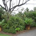 Adélaïde - Jardin botanique