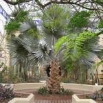 Adélaïde - Jardin botanique, serre tropicale