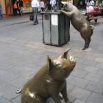 Adélaïde - Sculptures de cochon