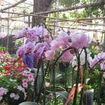 Marché aux fleurs d'Ayutthaya