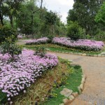 Parc, des fleurs