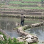 Hani travaillant sur sa rizière