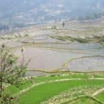 Vue sur les rizières