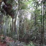 Mont Emei, forêt