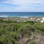 kangaroo Island - Bush