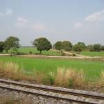Vue du train sur les rizières