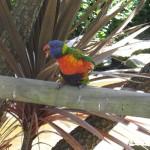 Nature World - Perroquet