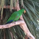 Nature World - Perroquet vert