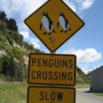 Oamaru - Attention passage de pengouins