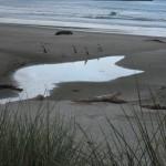 Péninsule Otago - 4 manchots à oeil jaune sortant de la mer