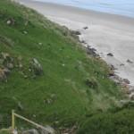 Péninsule Otago - Les manchots à oeil jaune grimpant la colline