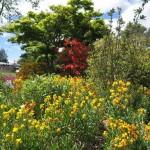 Rotorua - Fleurs du parc Kuirau