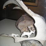 Musée Shaputuan - Sculpture en bois de caribou