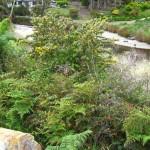 Bruny Island et sa végétation
