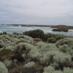 Great Ocean Road - La mer et ses plantes
