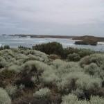 Great Ocean Road - La mer et ses plantes