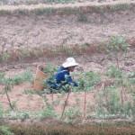 Femme Hani dans un champ