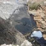 kangaroo Island - Lion de mer sur rocher