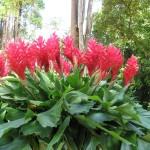 Magnifique fleur sur l'île