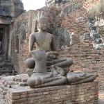 Bouddha et les singes
