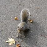 L'écureuil du Québec