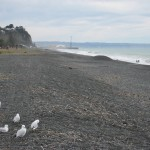 Napier - Sa plage de galets