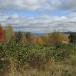 Vue d'arbres de toutes les couleurs