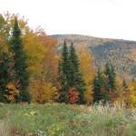Forêt Pointe-à-La-Garde