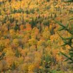 Forêt de toutes les couleurs