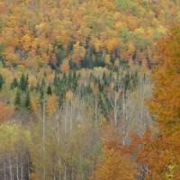 Forêt de Pointe-à-La-Garde