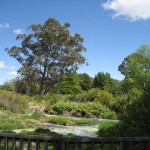 Rotorua - Parc Kuirau